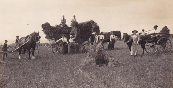Edwardian harvesting