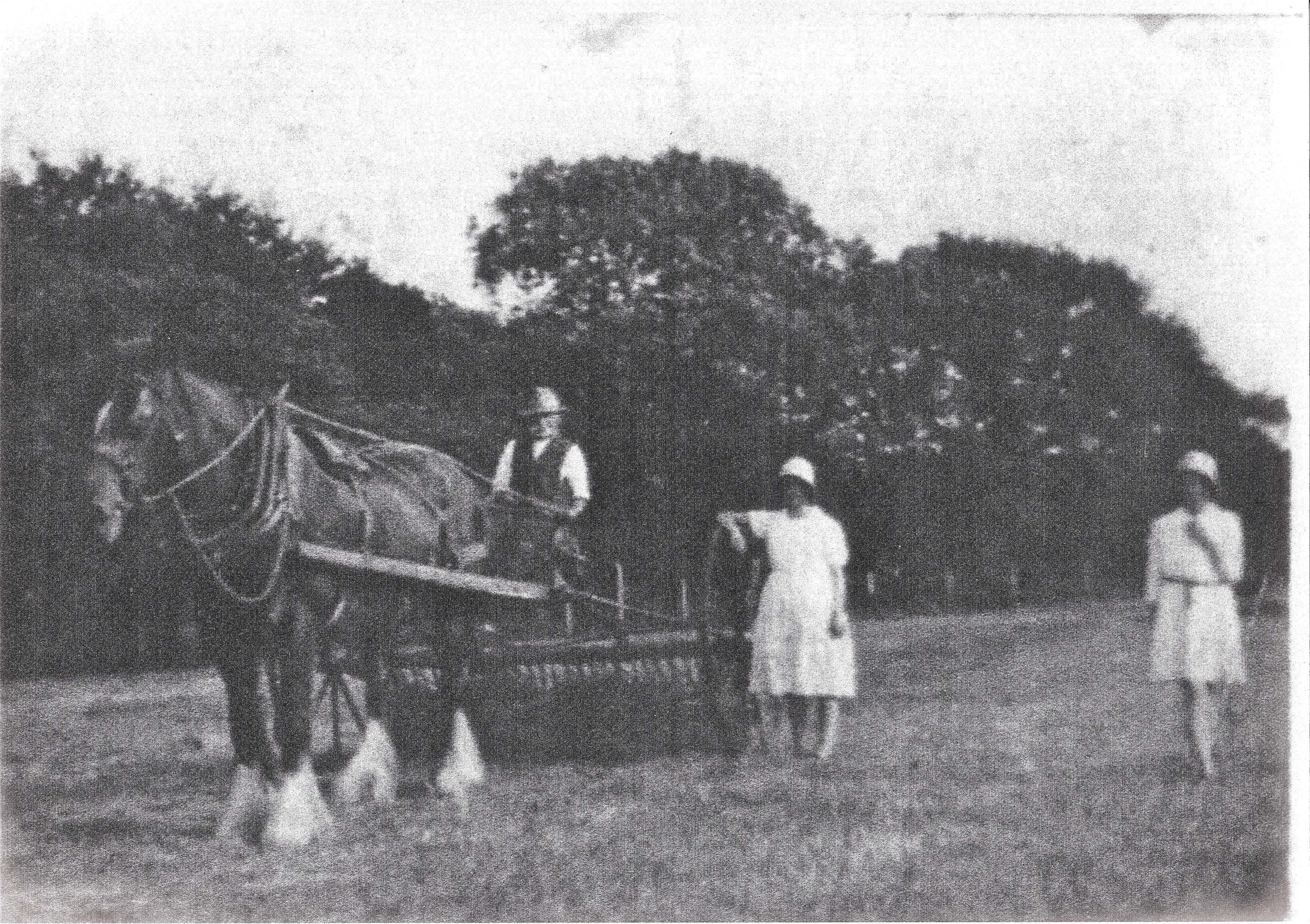 Horse and cart with man and two women
