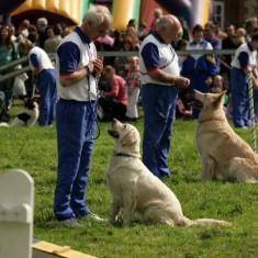 Dog handling 2006