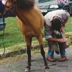 Farrier shoeing a horse.