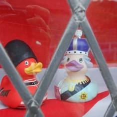 Queen & Prince ducks