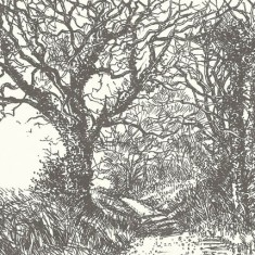 Drawing of trees bY Molly Dicker