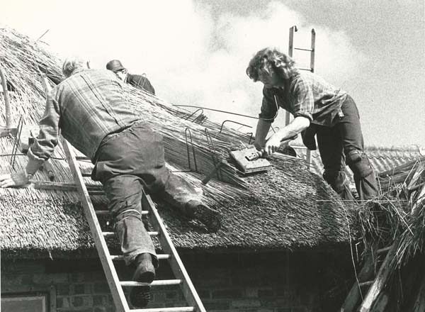 Thatchers on roof