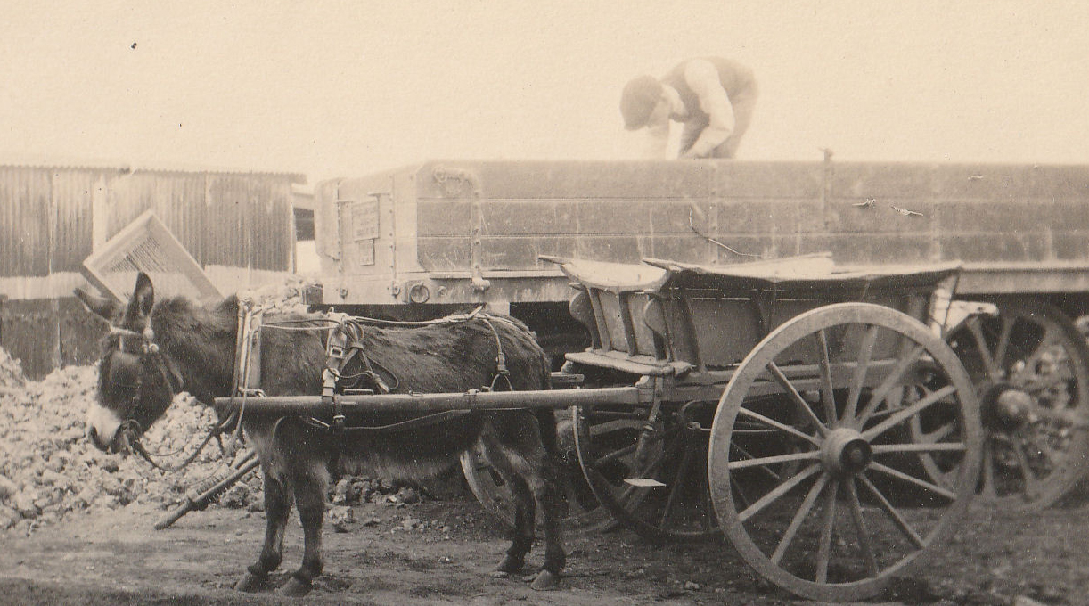 Pat the donkey and cart, July 1921