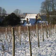 Vineyard with Court House behind, winter 2013