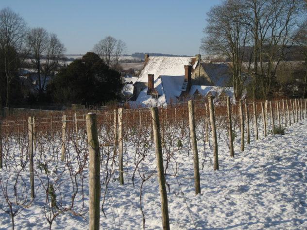 Vineyard with Court House behind, winterr 2013