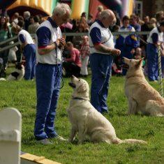Dog_handling competitio