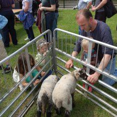 Lambs & kids