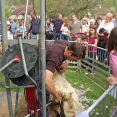 Wilson Atkinson supervises sheep shearing at Country Fair
