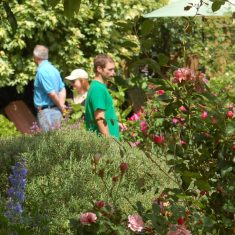 Young visitors to the Tudor House garden